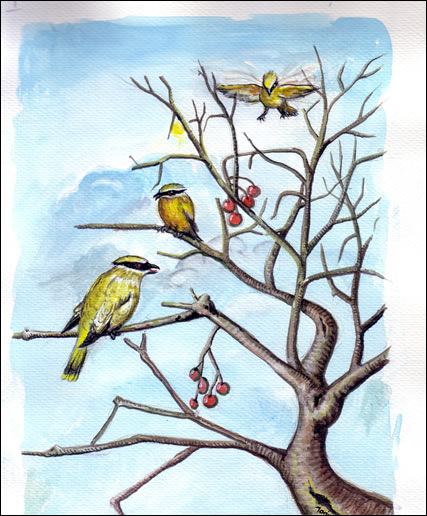 Natural Order.  Birds in a tree